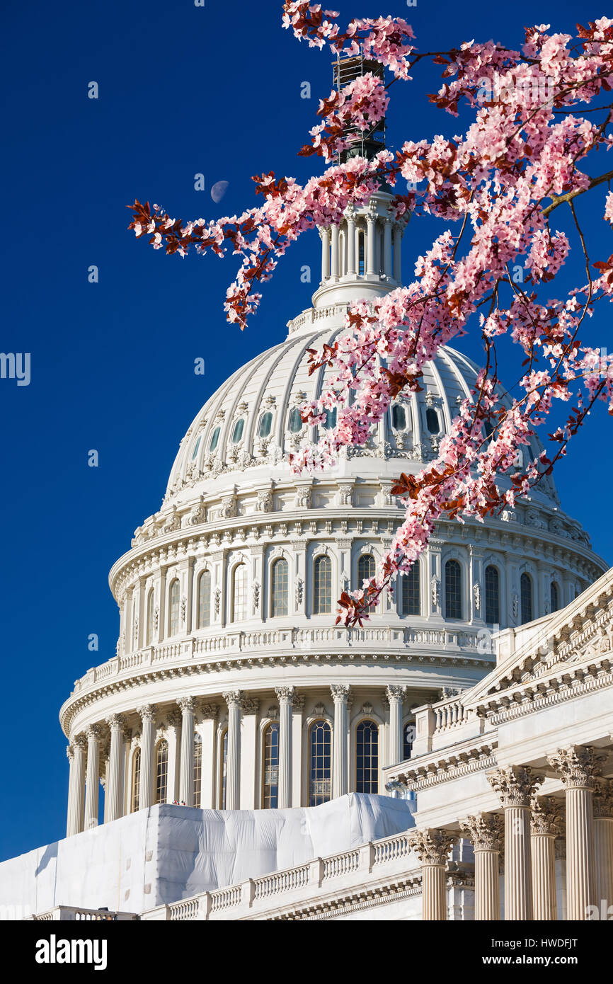 US Capitol at spring sunny day - Stock Image