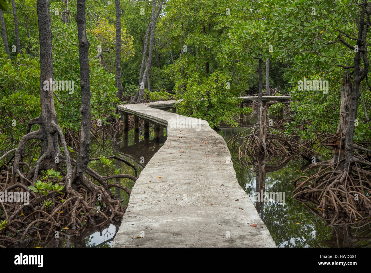 Boardwalk in Mangroves on Pulau Sulat, Lombok, Indonesia - Stock Image