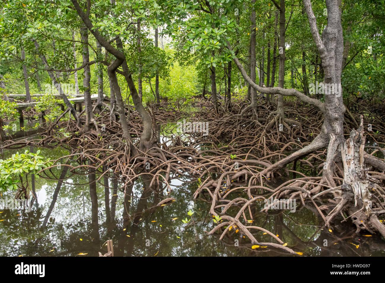 Mangroves on Pulau Sulat, Lombok, Indonesia - Stock Image