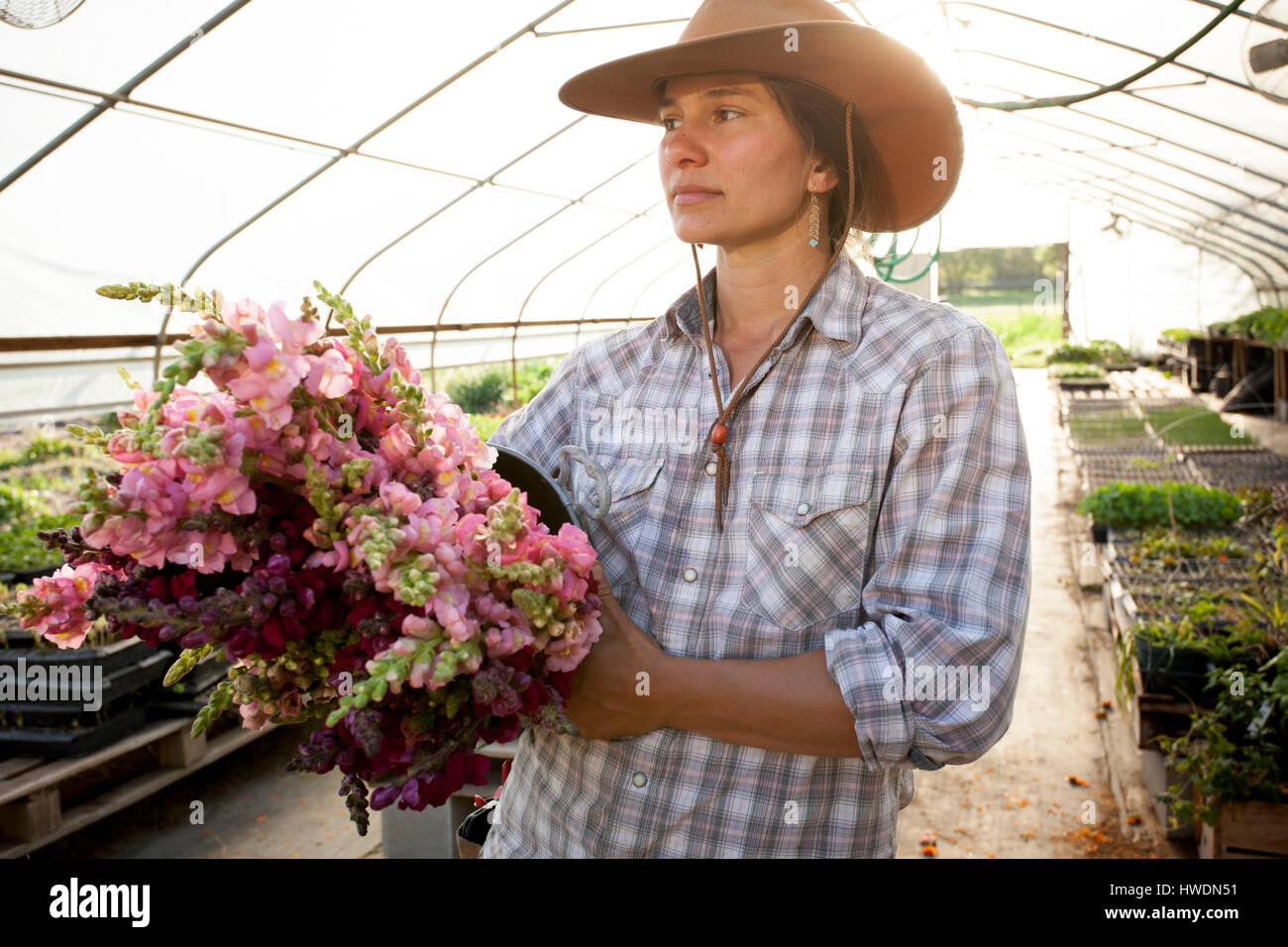 Young woman holding bucket of snapdragons (antirrhinum) in flower farm poly tunnel Stock Photo