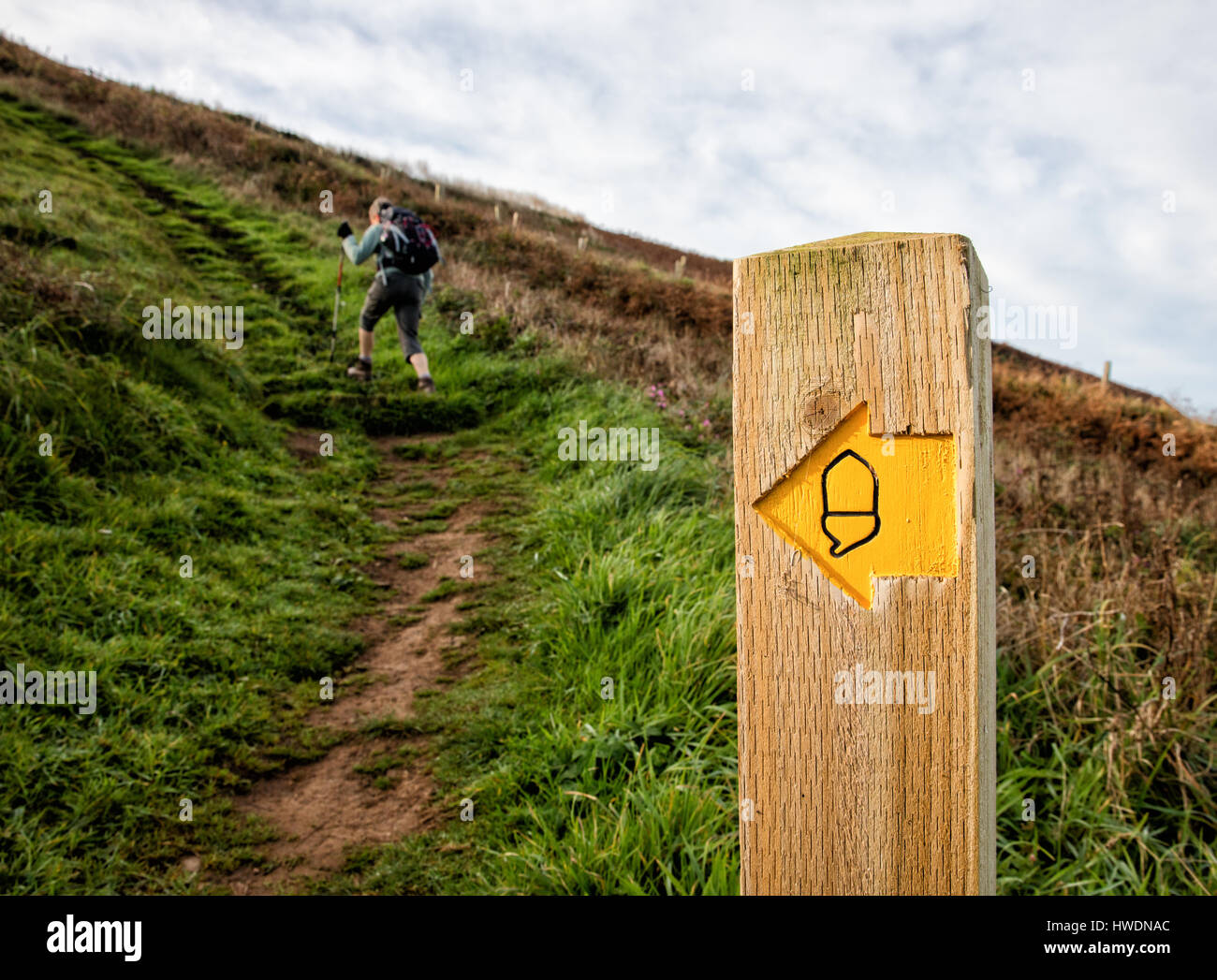 Female walker on the South West Coast Path negotiating part of the strenuous section between Hartland Quay and Bude - Stock Image