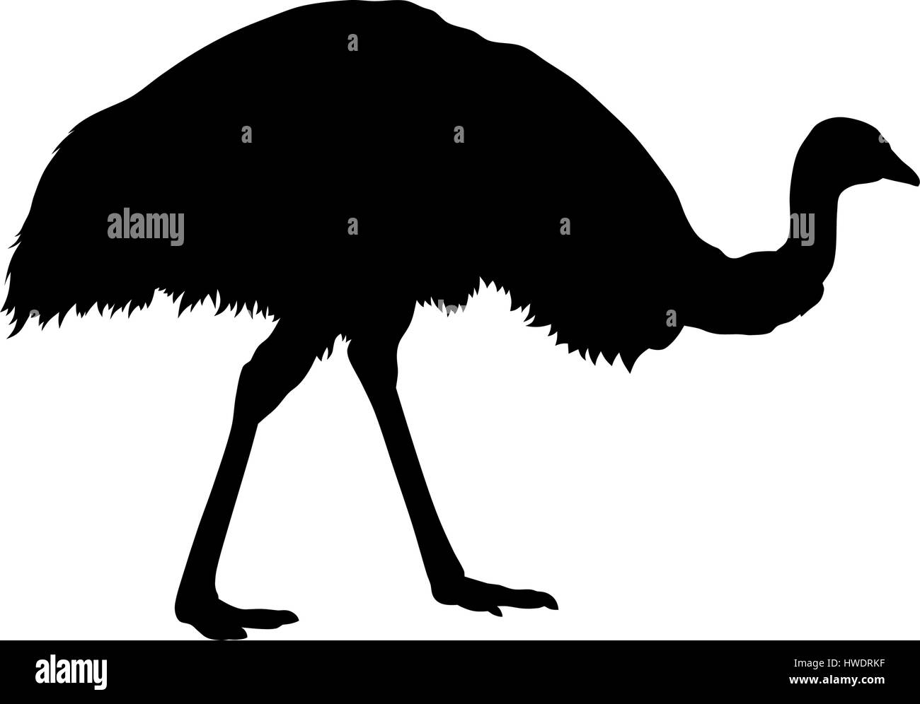 Vector illustration of emu silhouette - Stock Image