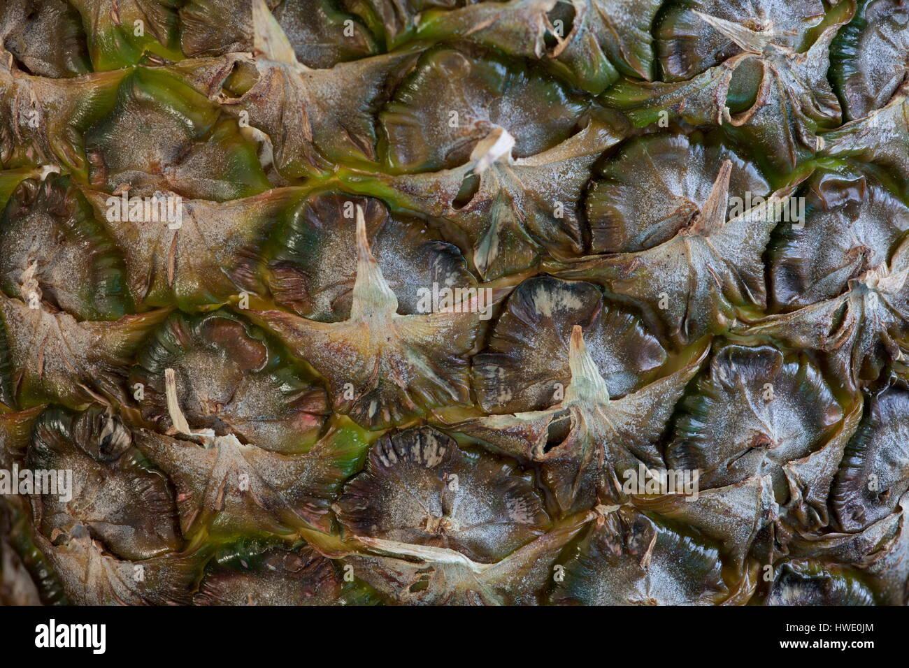Scaly peel  pineapple, rough outside delicious sweet inside macro - Stock Image