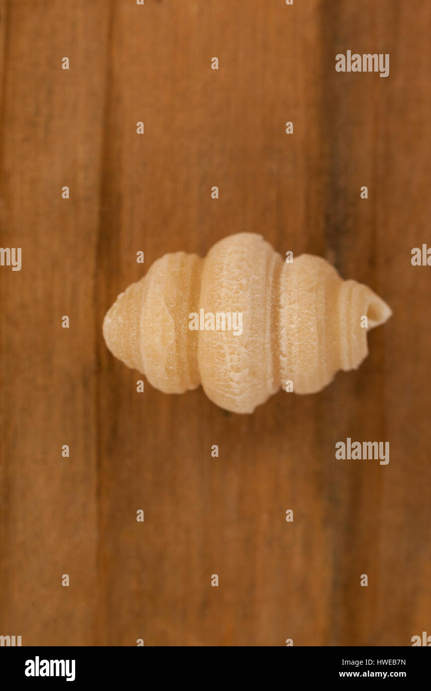 Conchiglie pasta isolated on wooden background Stock Photo