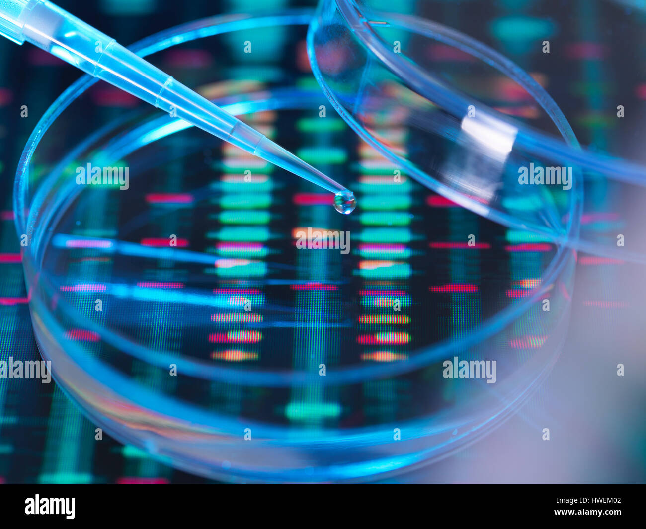 Genetic Research, A human sample being pipetted into a petri dish for genetic analysis sitting on DNA sequence - Stock Image