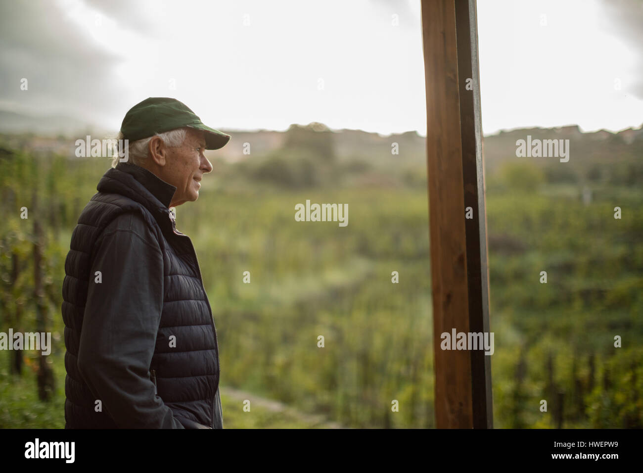 Senior man looking out over vineyard  landscape Stock Photo