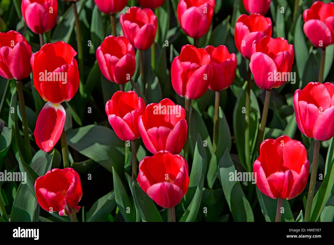 Plant Breeding Stock Photos & Plant Breeding Stock Images - Alamy