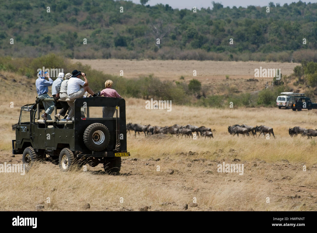Tourists watching the annual great wildebeest migration in Maasai Mara,  i Kenya in July 2010. - Stock Image
