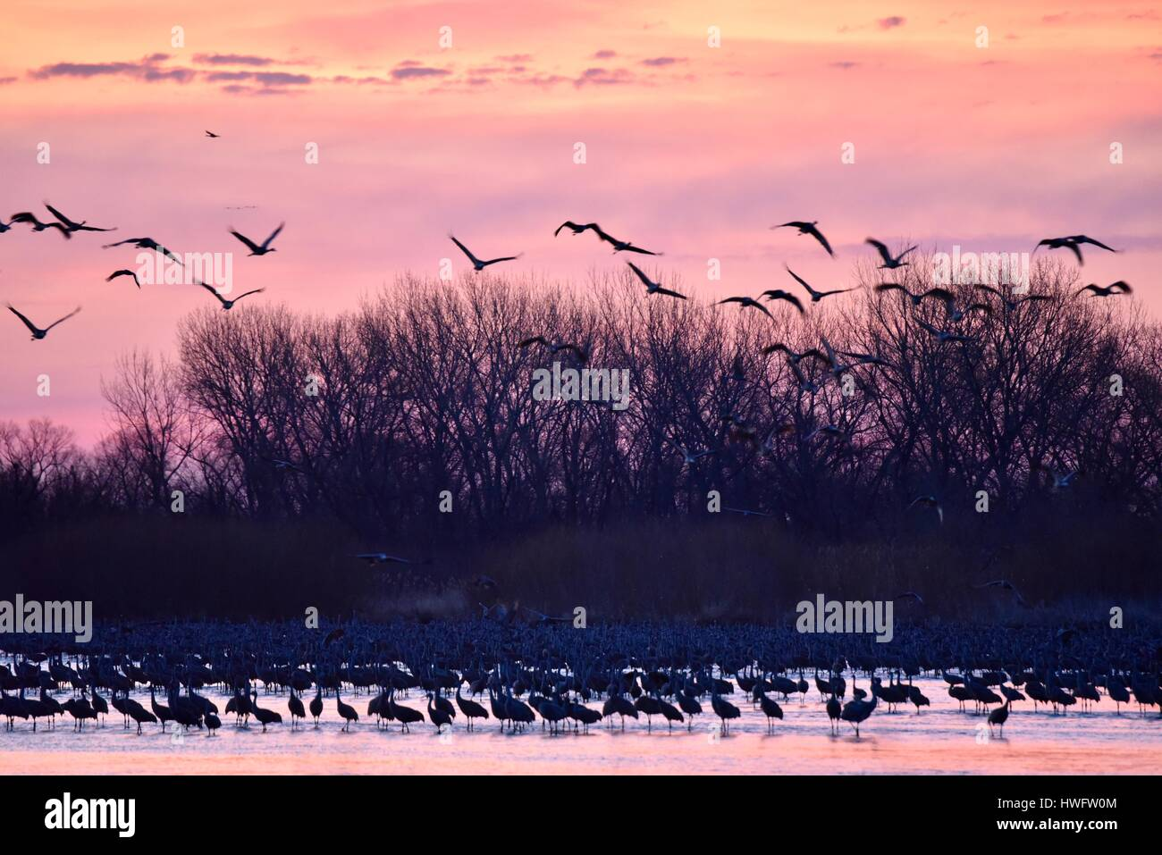 A Night With The Sandhill Cranes At The Crane Trust In >> Wood River Nebraska Usa 20th March 2017 Among The World S Great