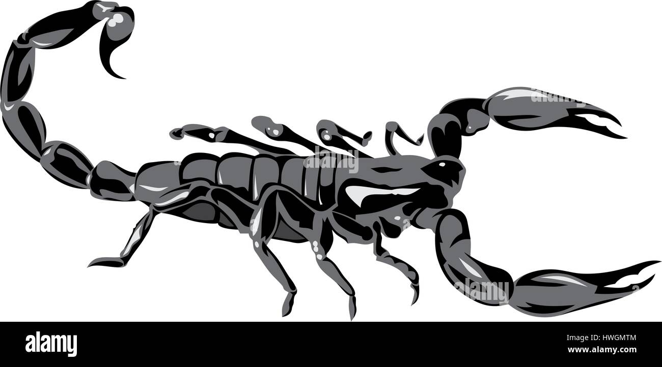 Abstract vector illustration of scorpion on white bacground - Stock Vector