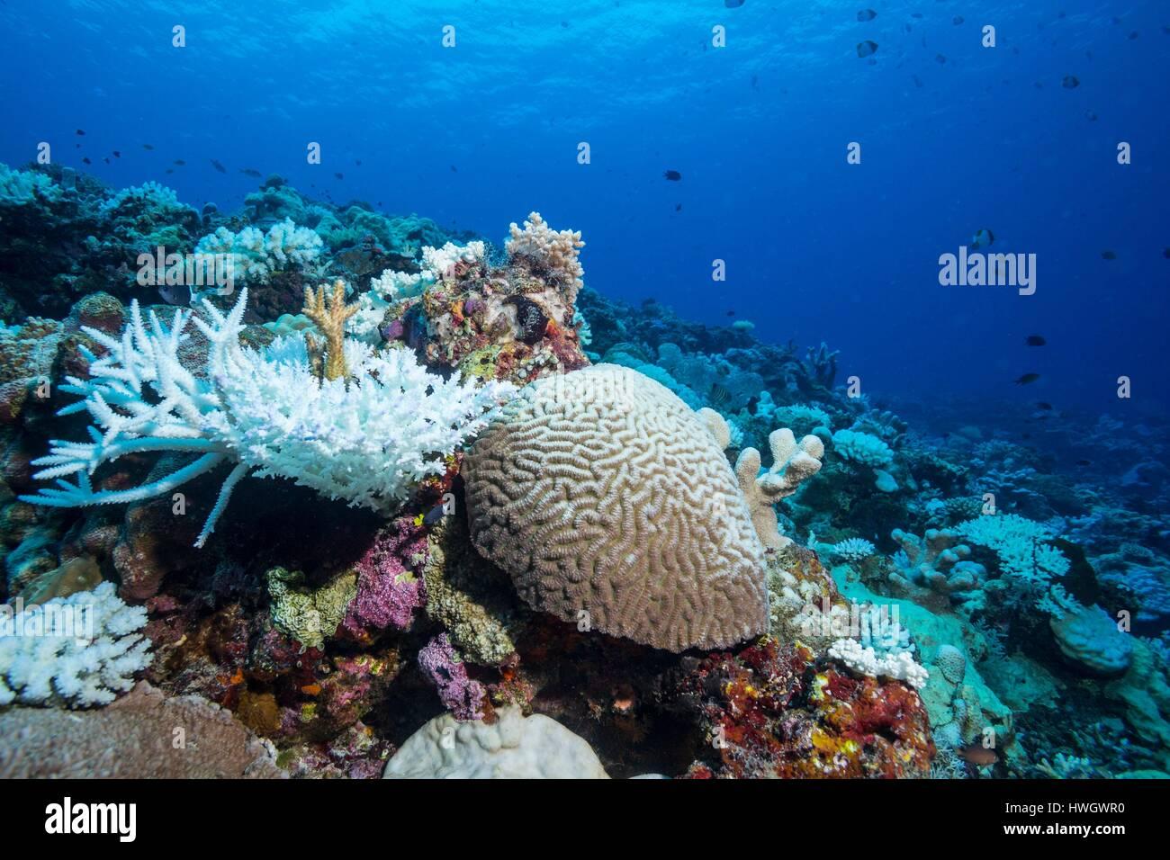 100% authentiek koop goed veel modieus Philippines, Mindoro, Apo Reef Natural Park, coral reef ...