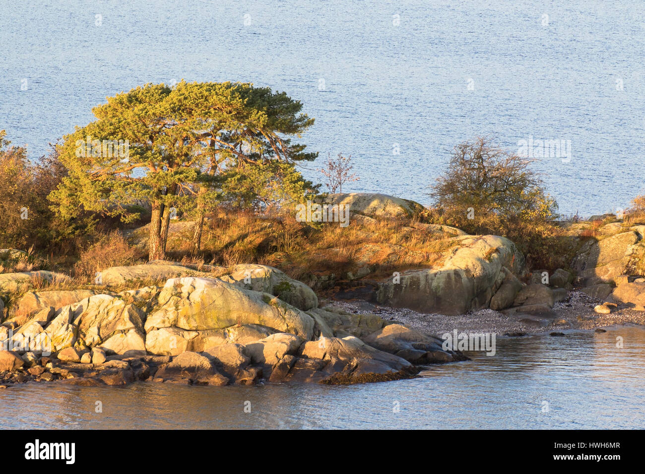 small island with pines in the Oslo fjord, Norway, Akershus, Oslo fjord, island, plants, pines, Pinus sp., seasons, - Stock Image
