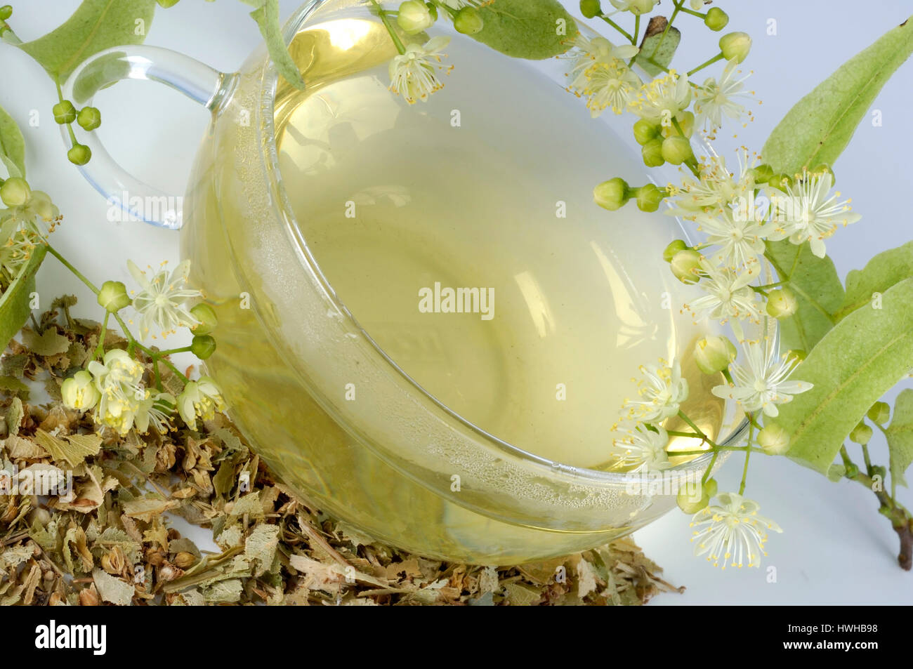 Lime, a cup of tea and dried blooms, Tilia tomentosa, summer lime-tree, a cup with tea and dry blossoms, Tilia tomentosa Stock Photo