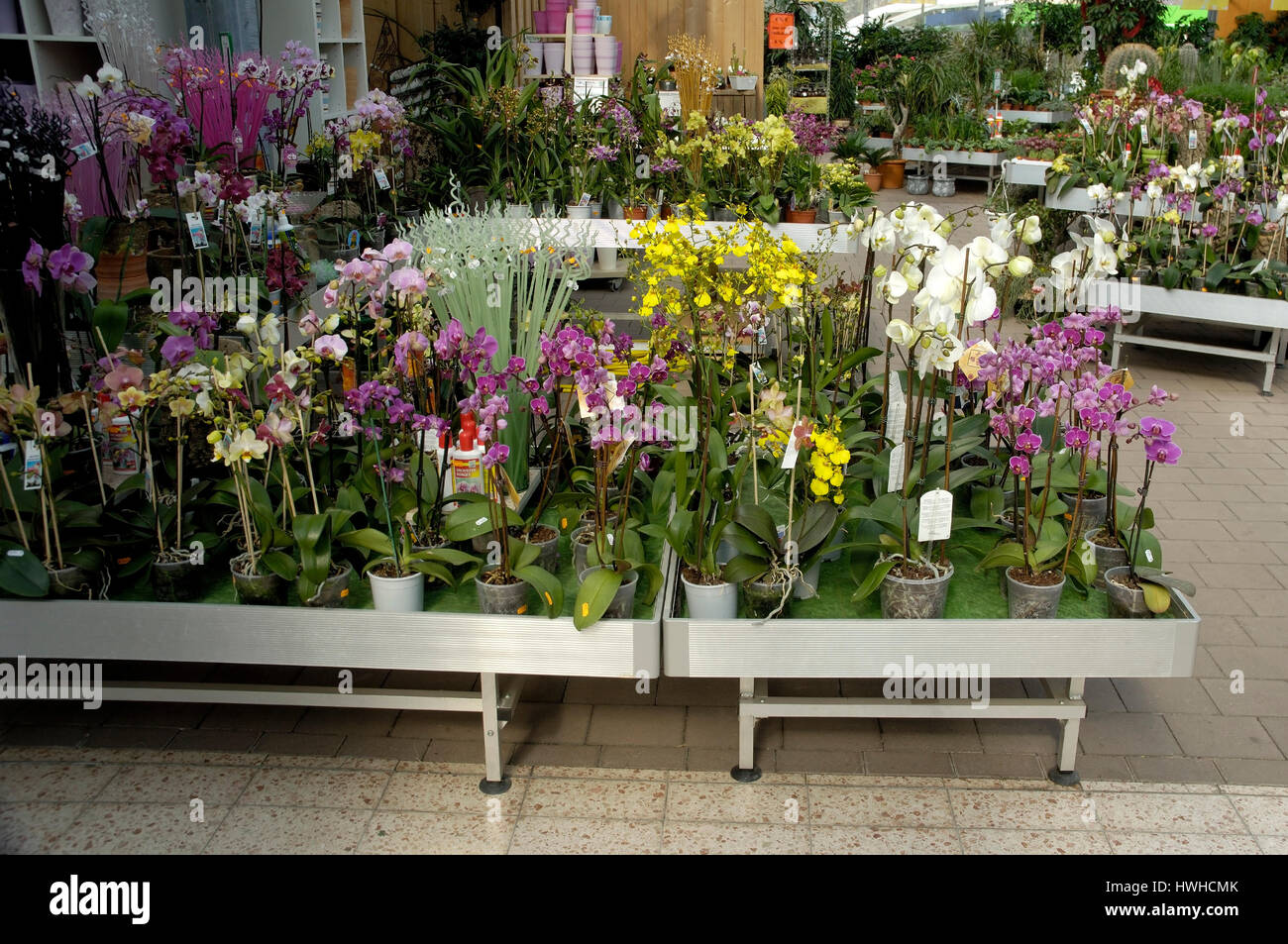 Nursery with orchid, garden centre orchids in a market garden, Nursery with orchid | Gartencenter / Orchideen in - Stock Image