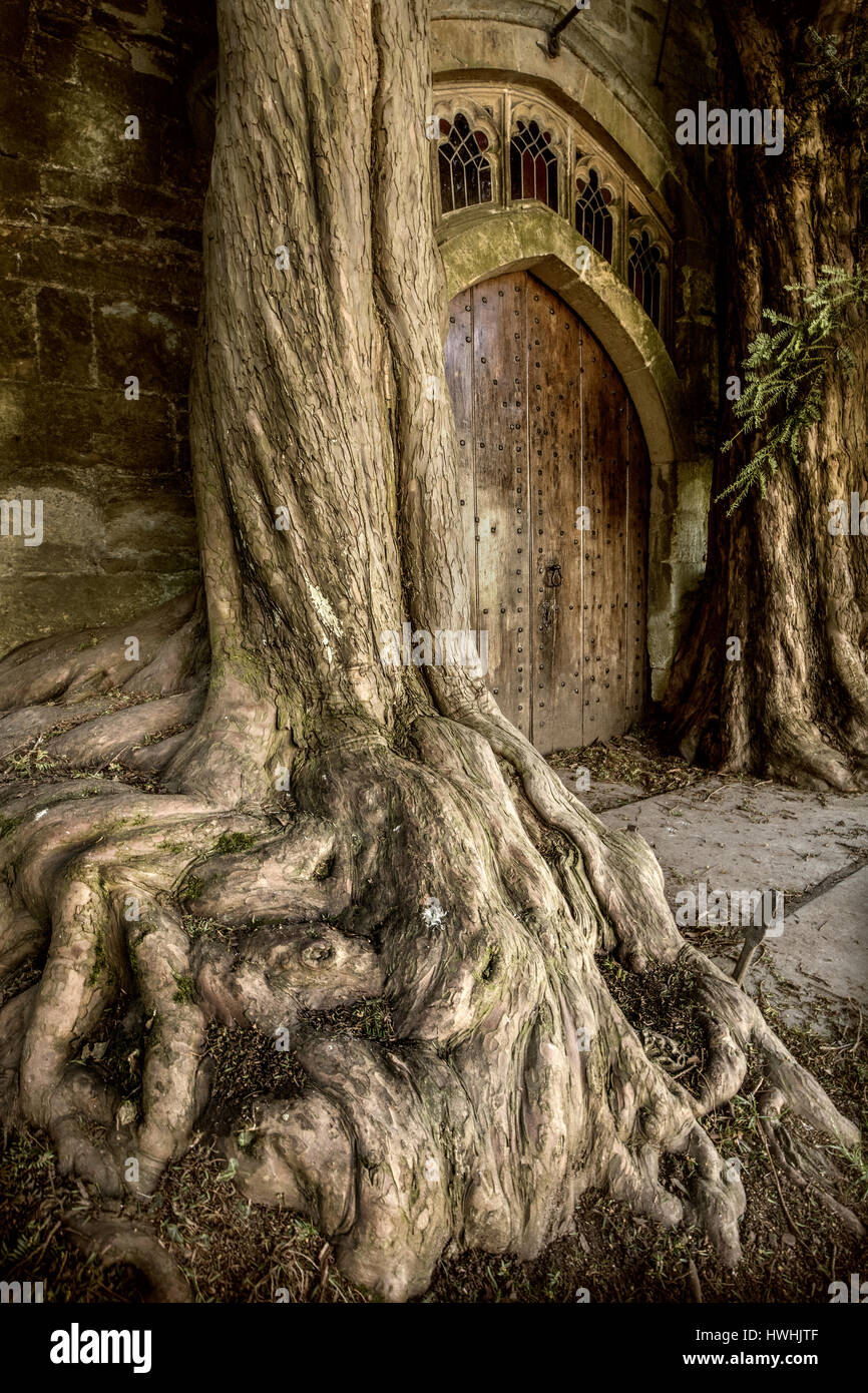 Yew trees flanking door in the north porch of St Edwards parish church in Stow on the Wold Gloucestershire  - inspiration Stock Photo