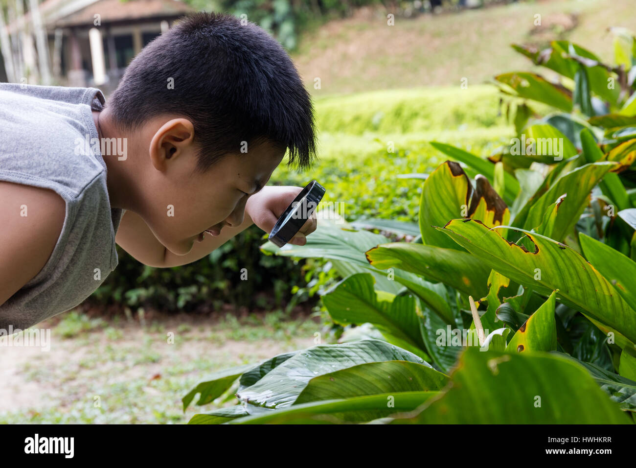 Asian Chinese little boy looking through magnifying glass at a outdoor garden. - Stock Image