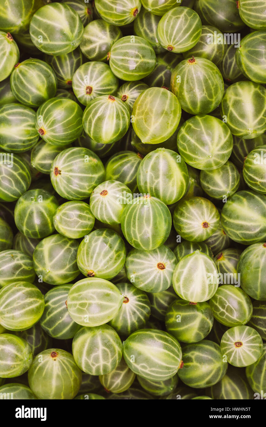 Green Organic Berries Gooseberries. Ripe Gooseberry Background. Greenery, Green: Pantone Color - Trend 2017 - Stock Image