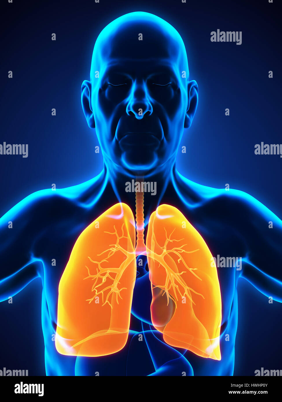 Elderly Male Respiratory System - Stock Image