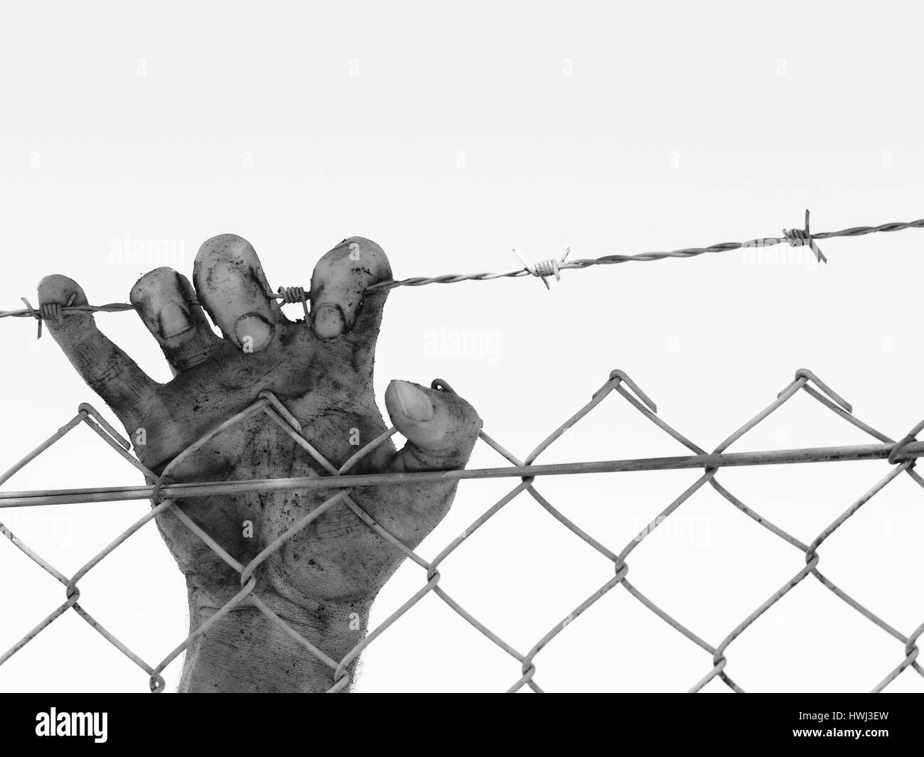 Dirty and discolored hand clinging to a steel barb wire fence, black ...