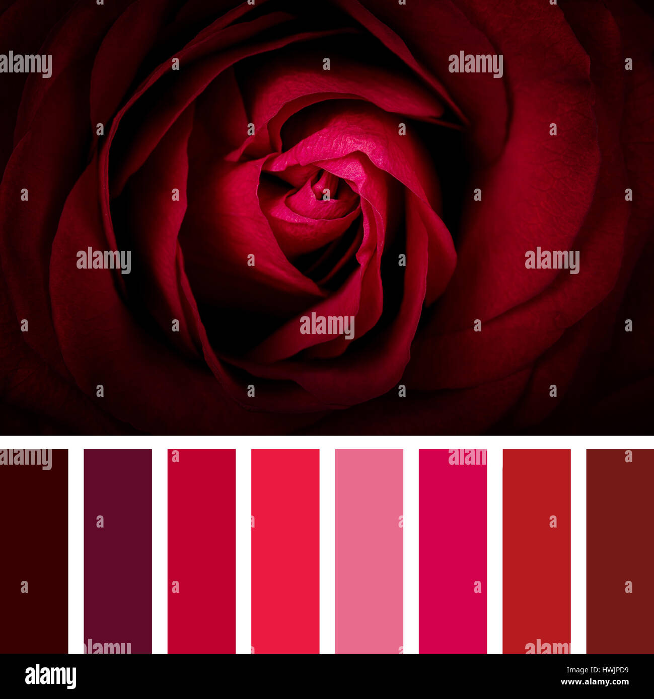 Pink And Red Colour Chart Stock Photos Pink And Red Colour Chart