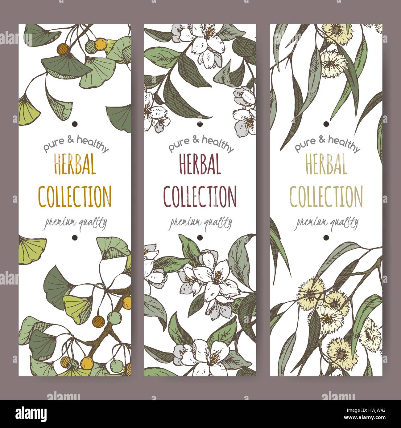 Three color labels with Ginkgo, jasmine and eucalyptus on white. - Stock Vector