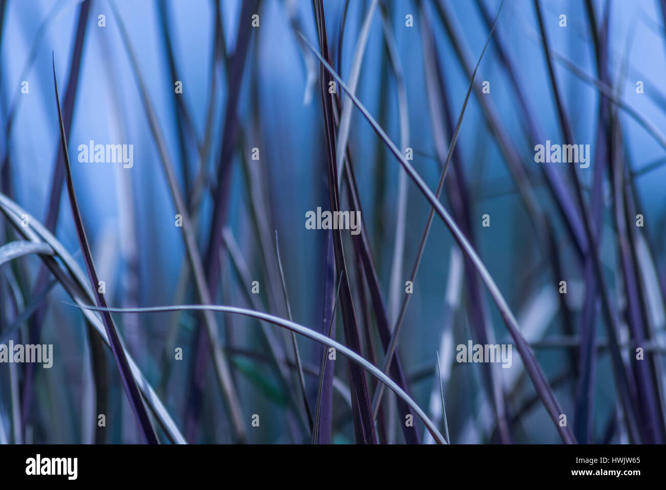 Wild grass abtract in blue shades. - Stock Image