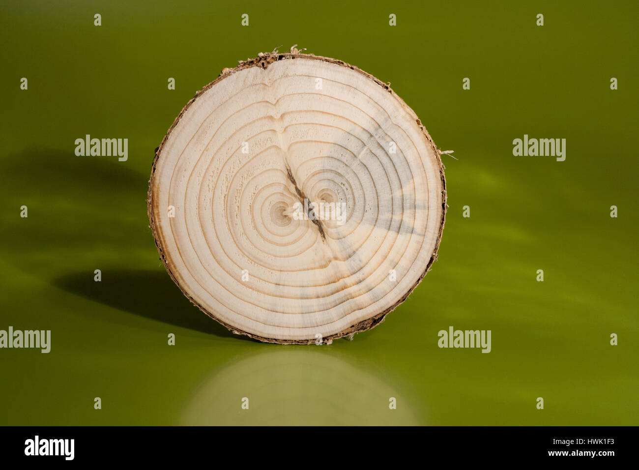 One pine saw cut on green background. Clearly visible two cores and annual rings. - Stock Image