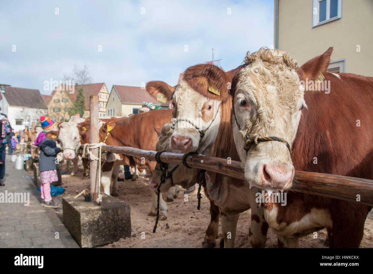 city festival and cattle award, kirchberg, jagst valley, Schwaebisch Hall, Hohenlohe region, Baden-Wuerttemberg, - Stock Image