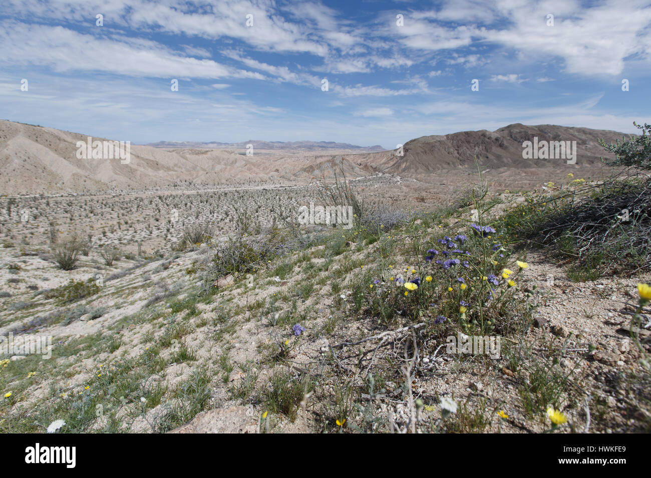 Super Bloom Stock Photos Super Bloom Stock Images Alamy