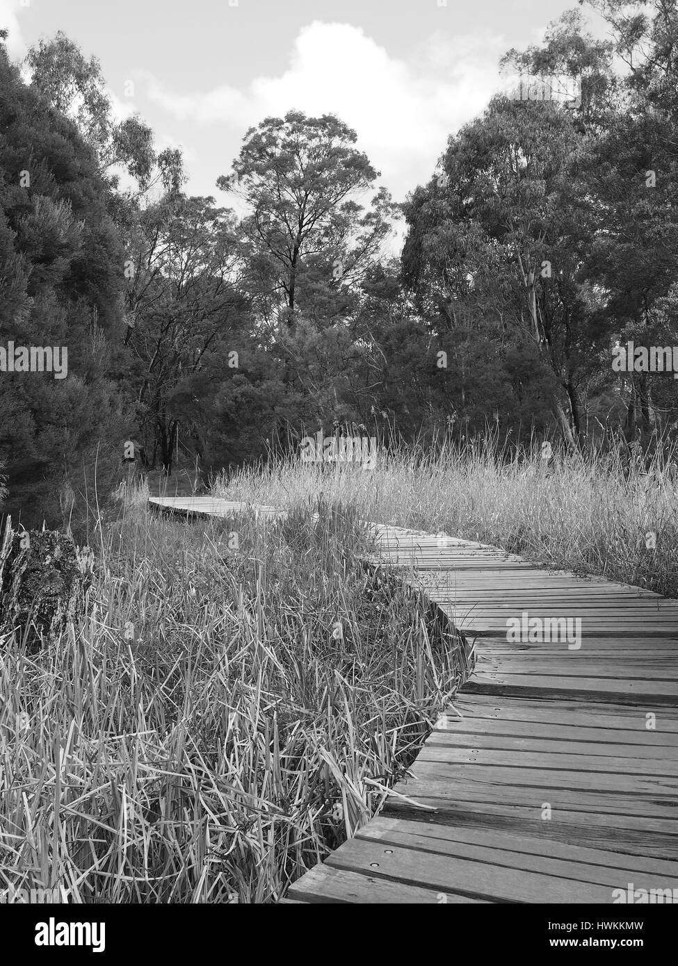 Timber board walk along a rural creek through bush and wetland in the late afternoon sun, Victoria, Australia 2016 - Stock Image