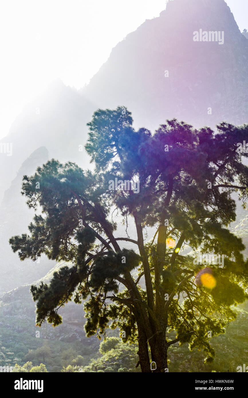 mountain scenery, trees, fruits fod and various colors - Stock Image