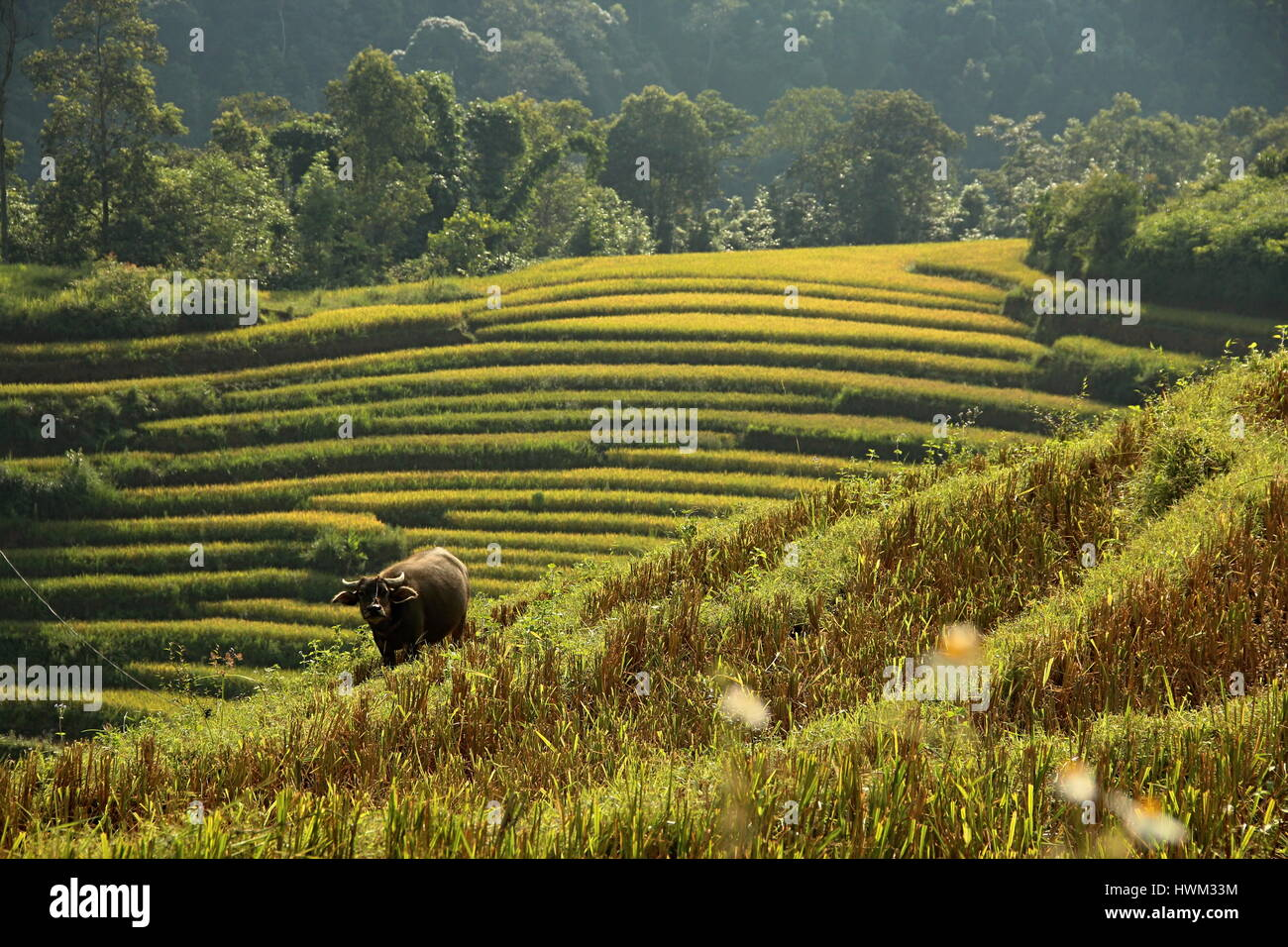 Sapa, North Vietnam - Stock Image