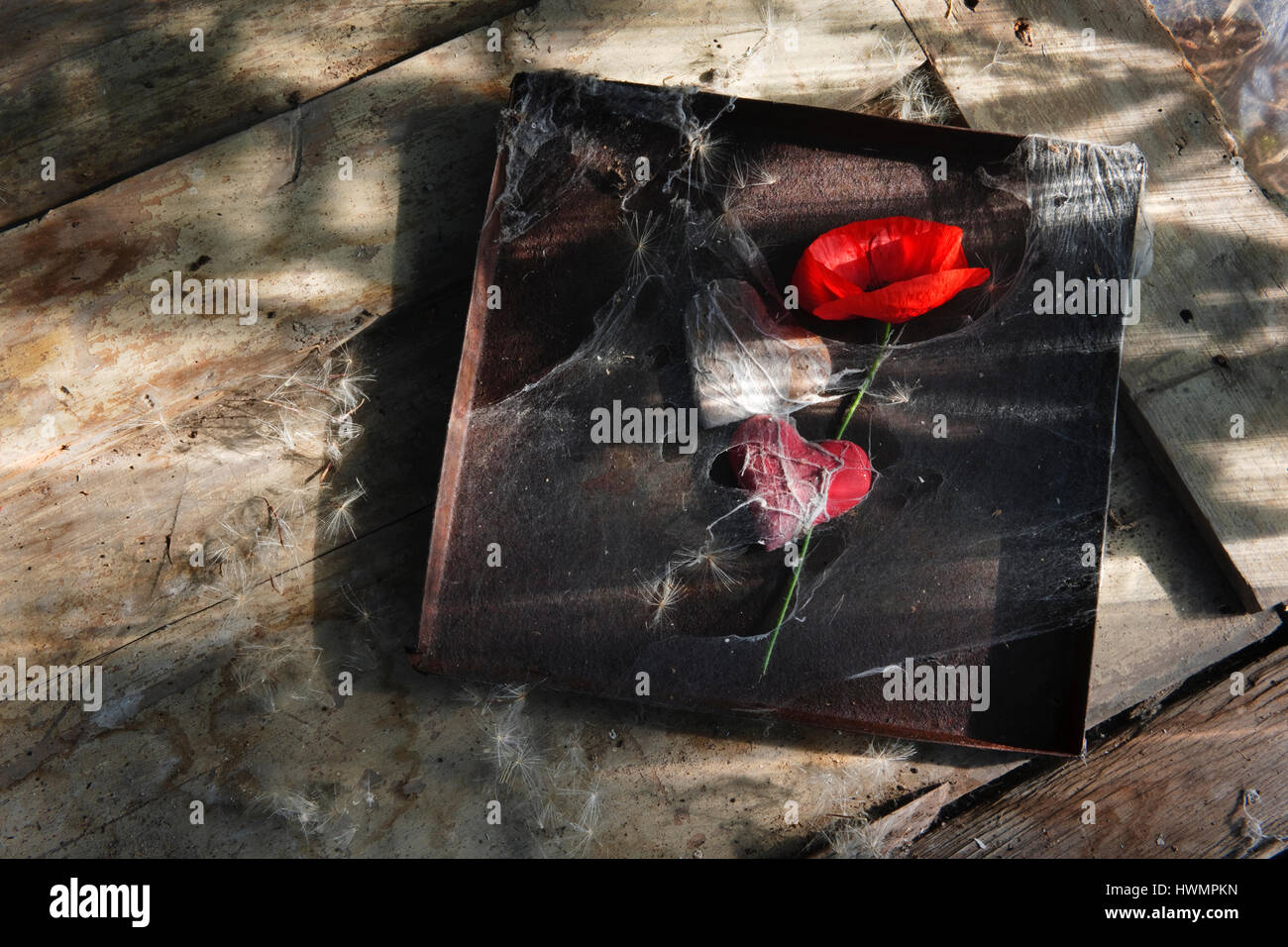 Red field poppy, two hearts, and rusty tin lid wrapped in cobweb on old wooden door - Stock Image