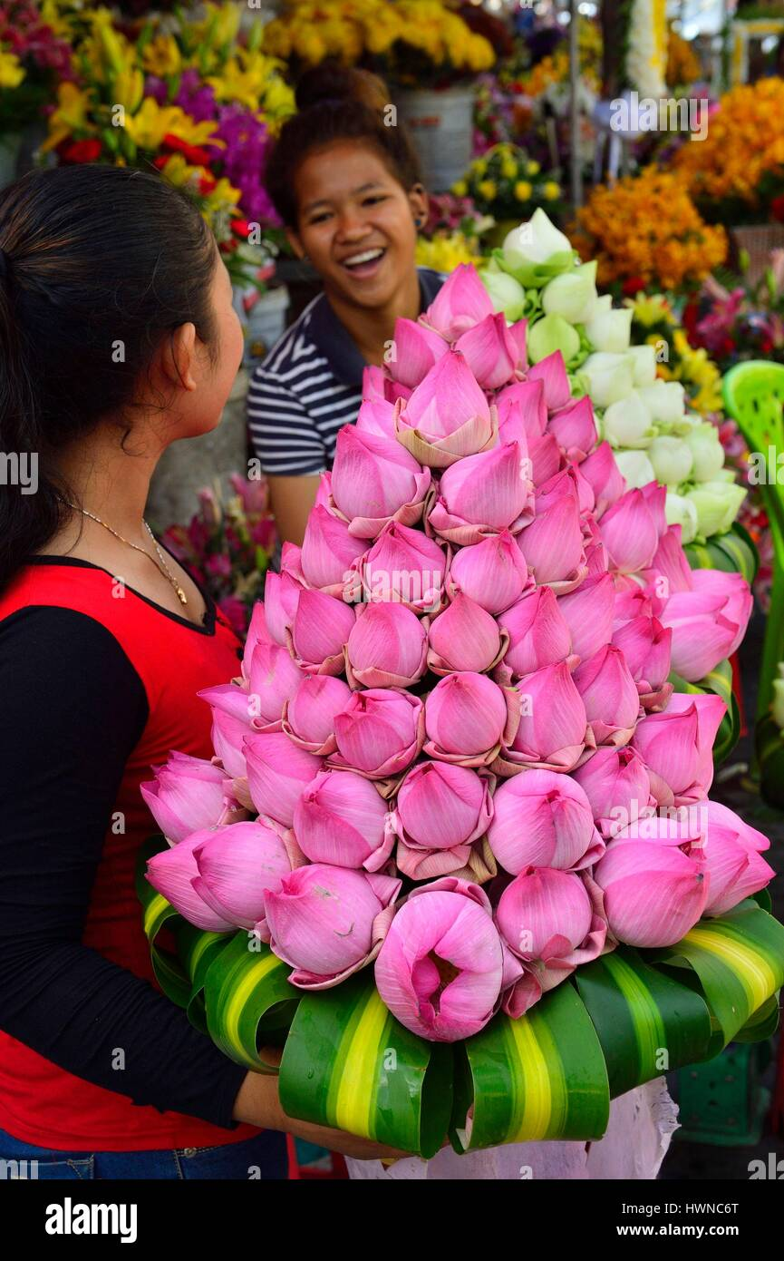 Cambodia, Phnom Penh, lotus flowers for offerings - Stock Image