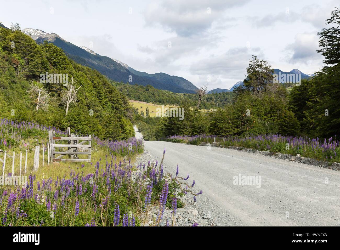 Chile, Patagonia, Aysen region, the southern route or Carretera Austral - Stock Image