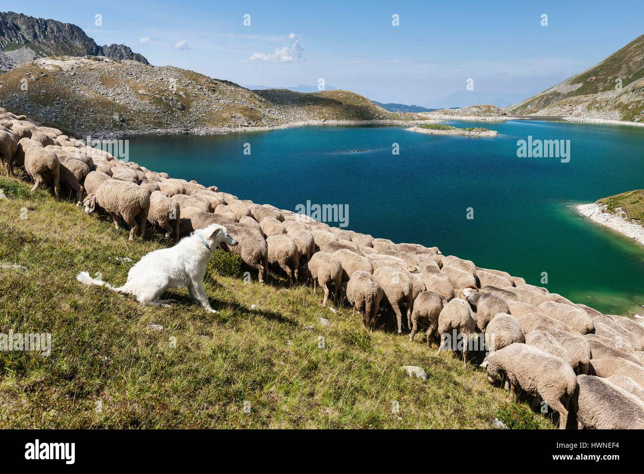 France, Isere, the massif of Belledonne, the Sept Laux, shepherd and herd of sheep - Stock Image