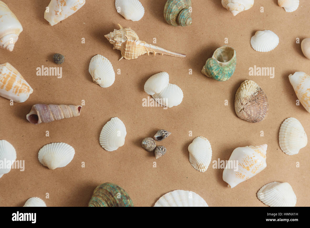 seashells on light background. flat view - Stock Image