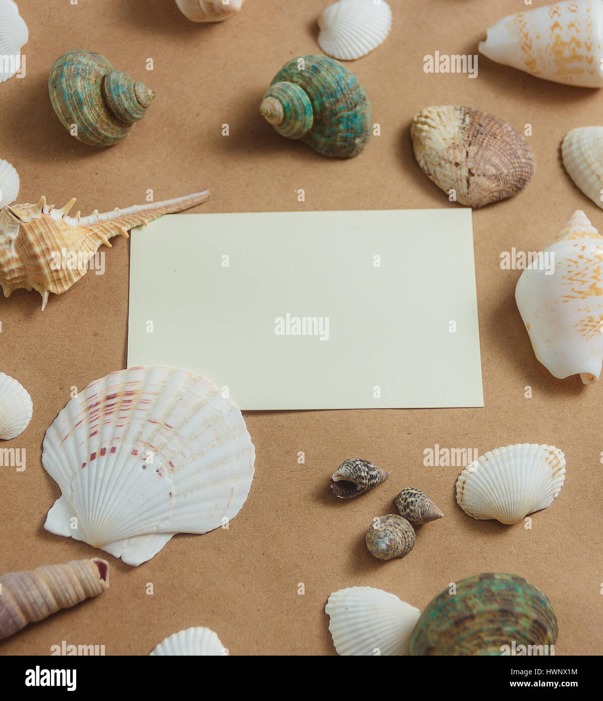 seashells with blank card on light background. flat view - Stock Image