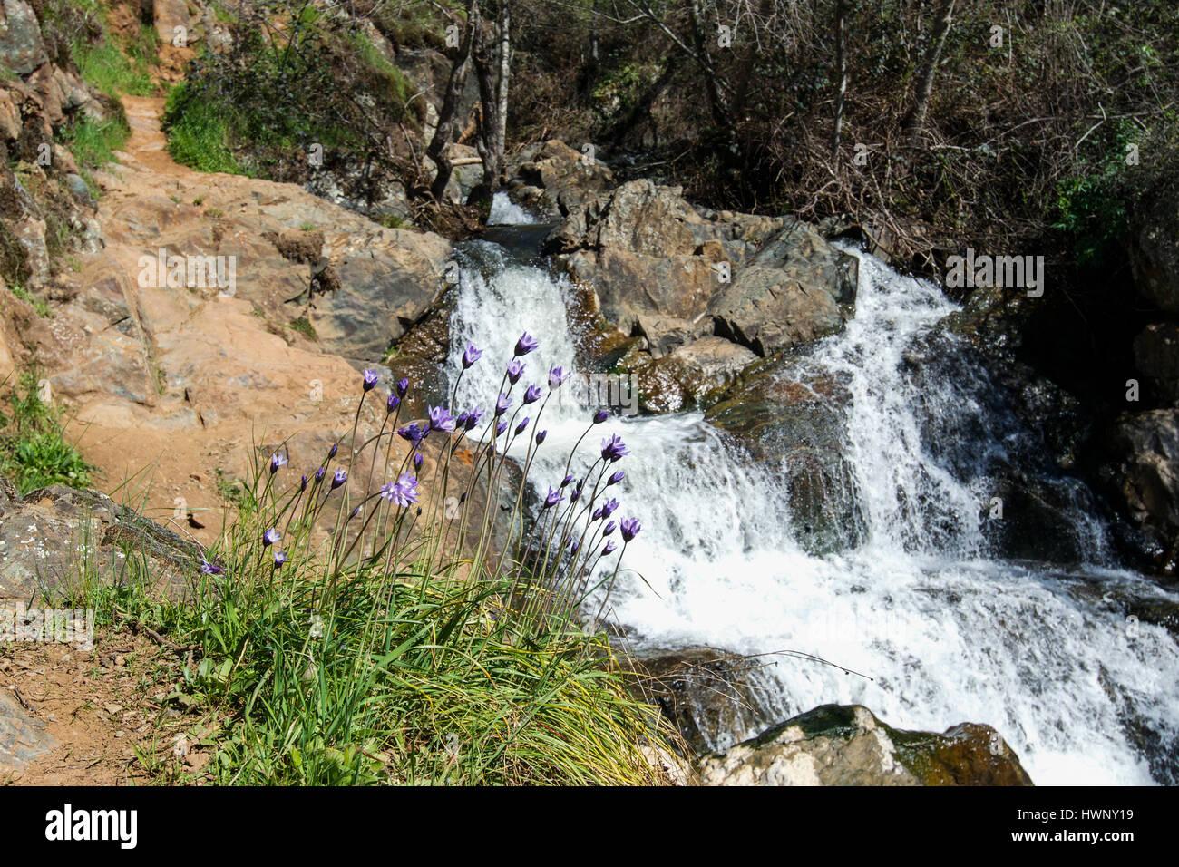 hidden falls hike auburn ca, hidden falls park auburn california, hidden falls adventure park trail map, on hidden falls trail map auburn ca