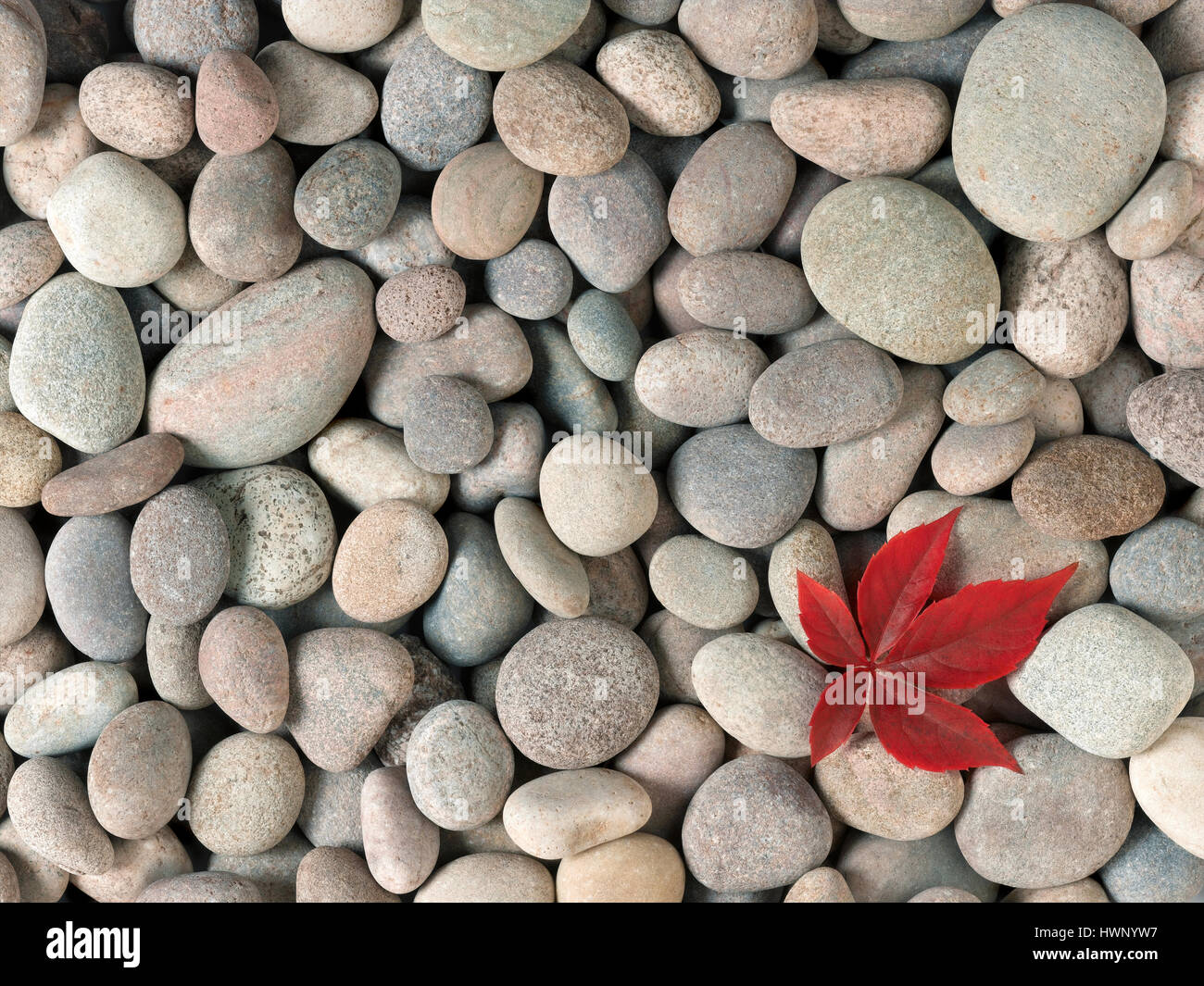 red leaf on pebbles - Stock Image