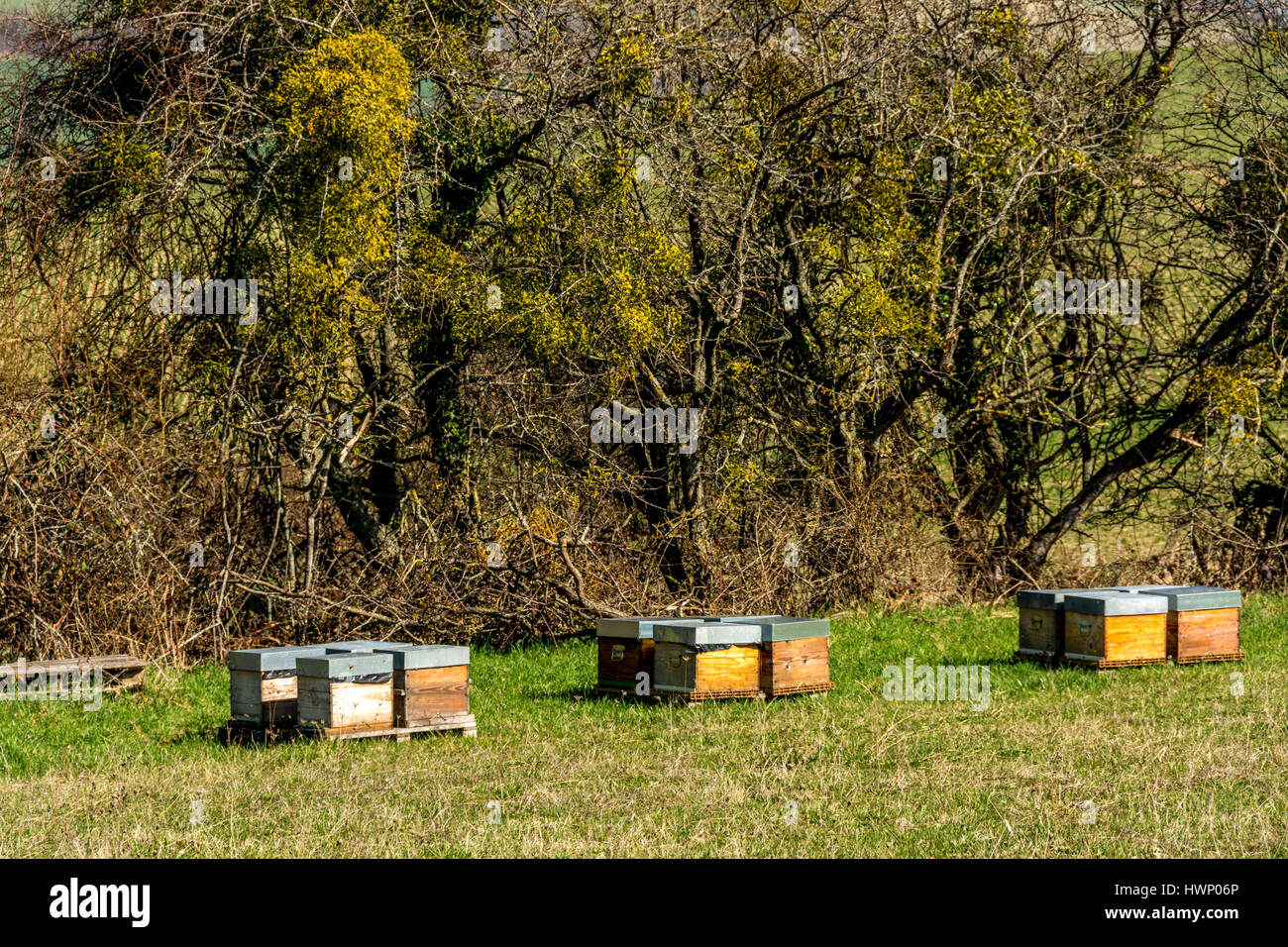 Bee hives  . Auvergne. France - Stock Image