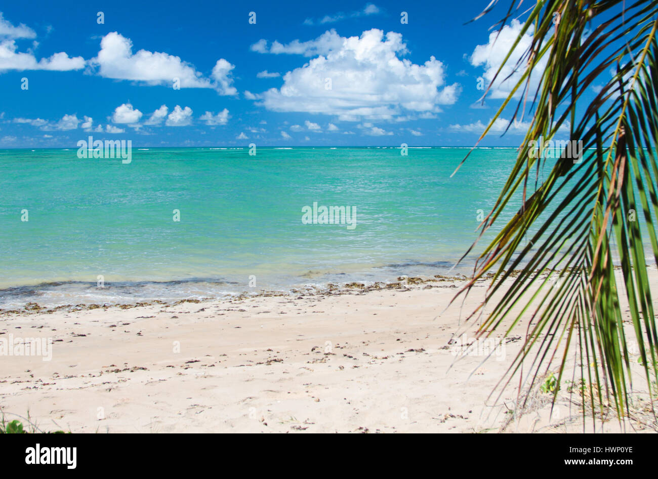 Beach Vacations: Turquoise sea of Patacho Beach, Alagoas, Brazil, considered one of the most beautiful beaches in Brazil. Stock Photo