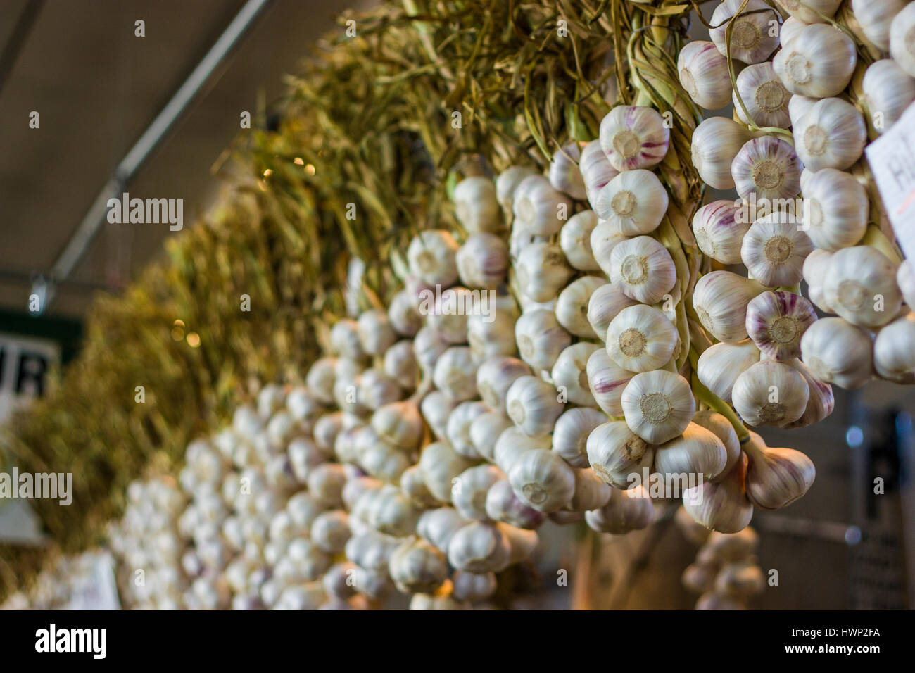 Freshly harvested home grown organic onions suspended to dry off Stock Photo