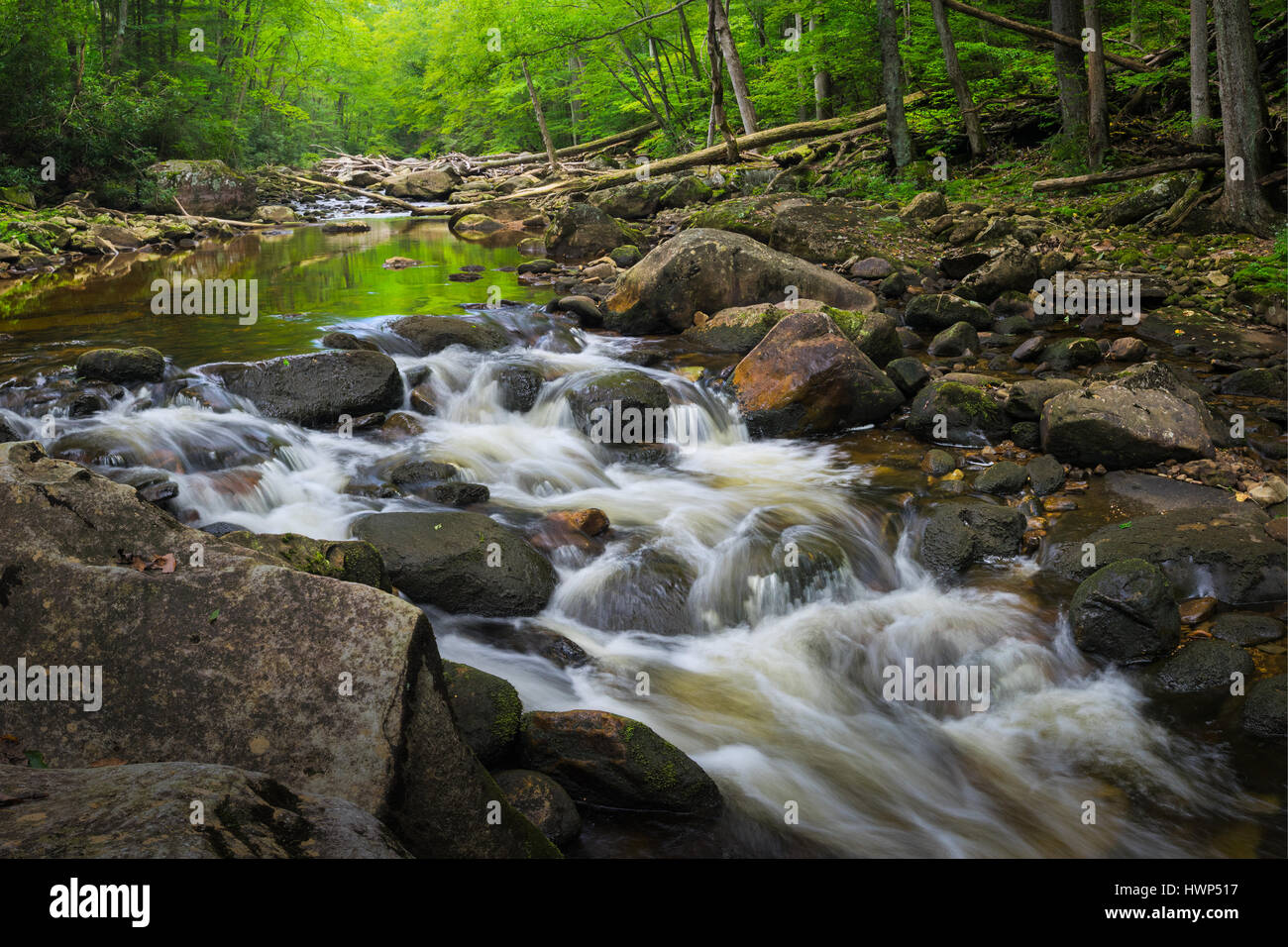 One of many cascades in the Otter Creek Wilderness, of West Virginia, the water providing a mirror for the surrounding - Stock Image
