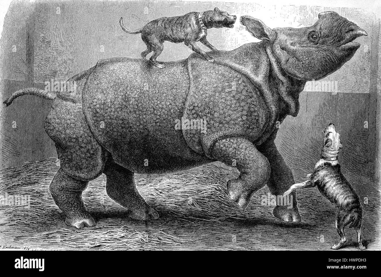 Rhino at the Zoo is besieged by gambling dogs, Reproduction of an original woodcut from the year 1882, digital improved - Stock Image