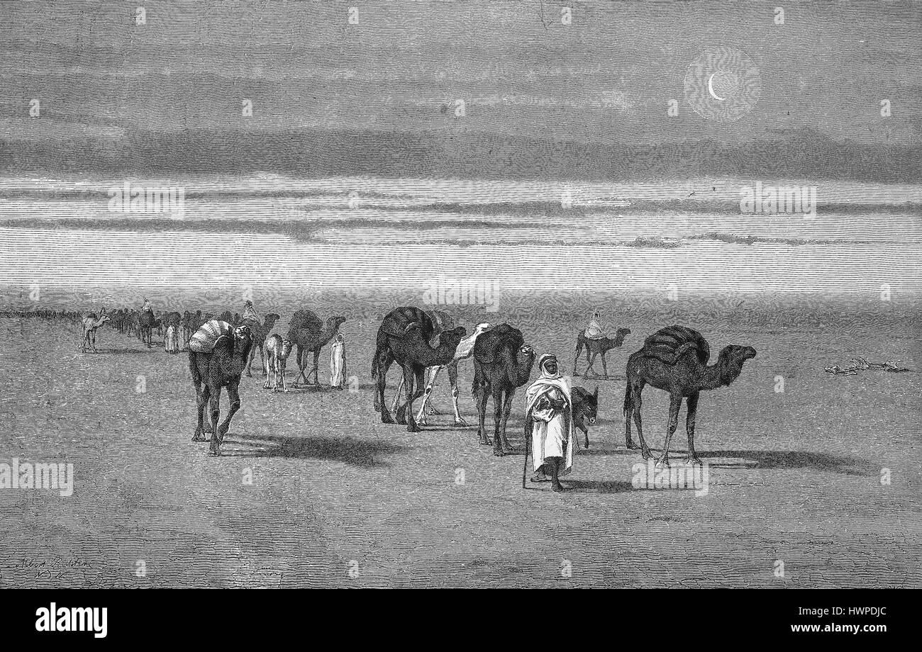 Caravan in the Sahara desert, Algeria, Reproduction of an original woodcut from the year 1882, digital improved - Stock Image