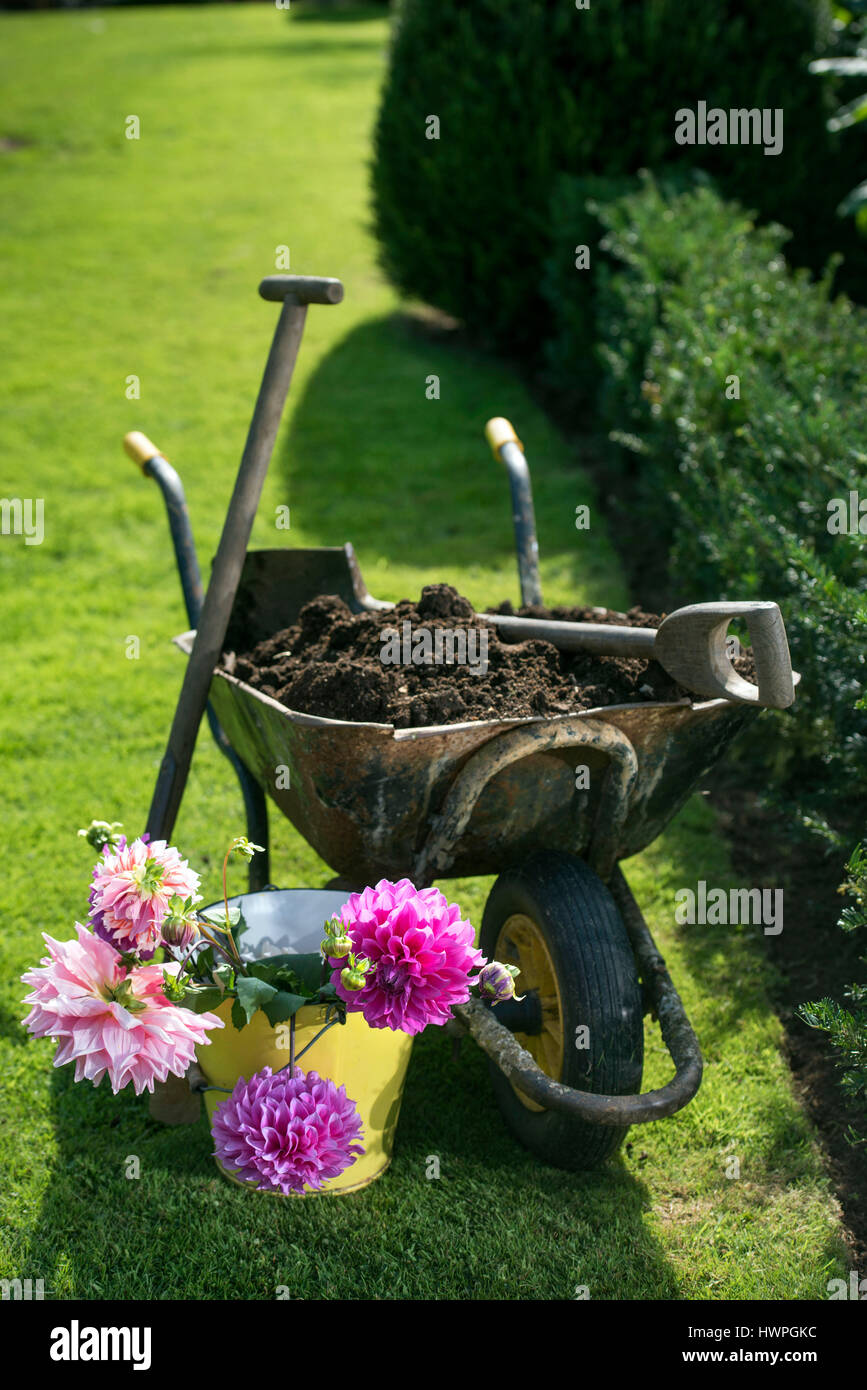 Re. Making compost at Wardington Manor near Banbury, Oxfordshire - spreading compost amongst Dahlias Stock Photo