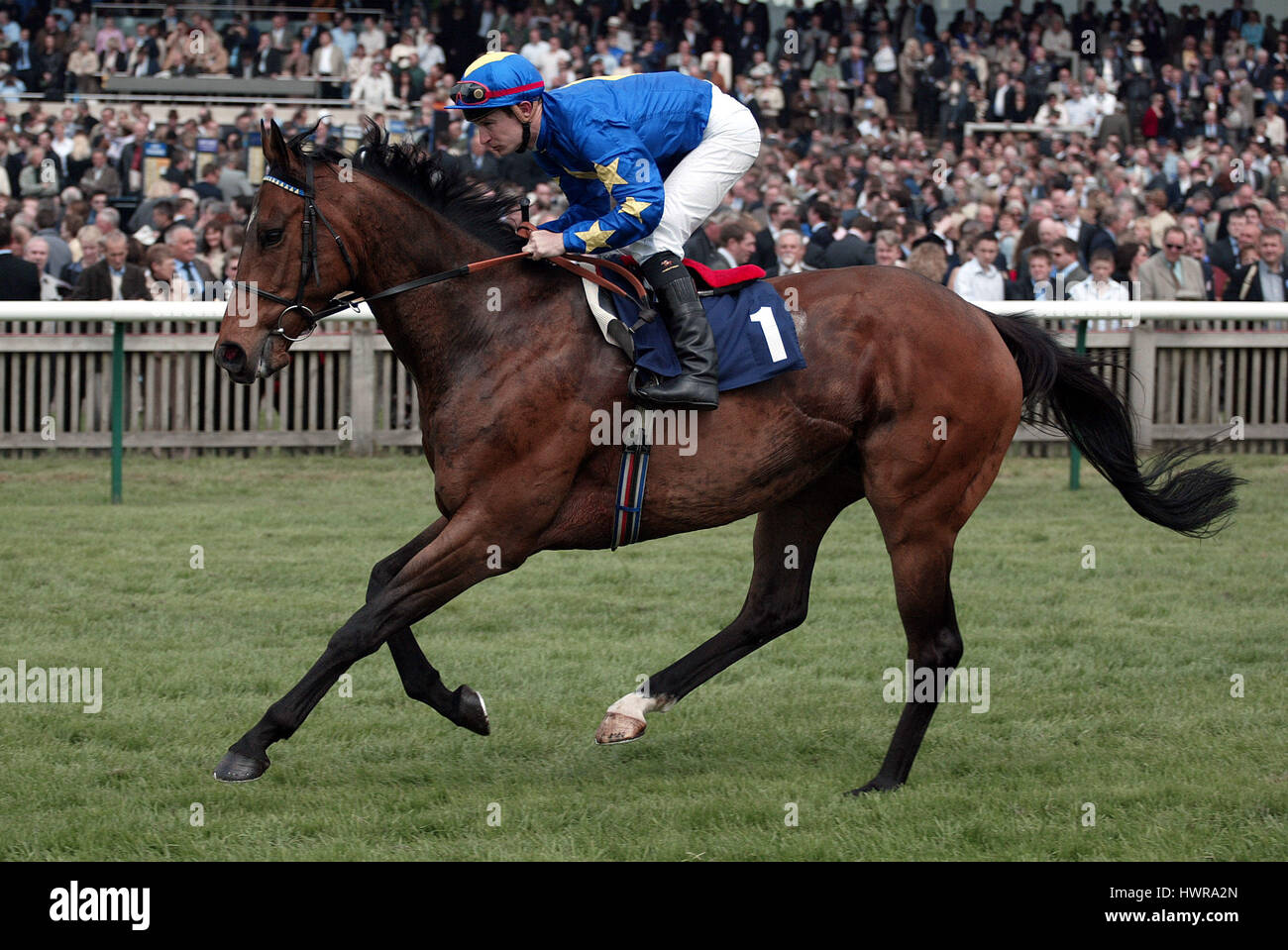 BORDER SUBJECT RIDDEN BY S.DROWNE NEWMARKET RACECOURSE NEWMARKET 03 May 2004 - Stock Image