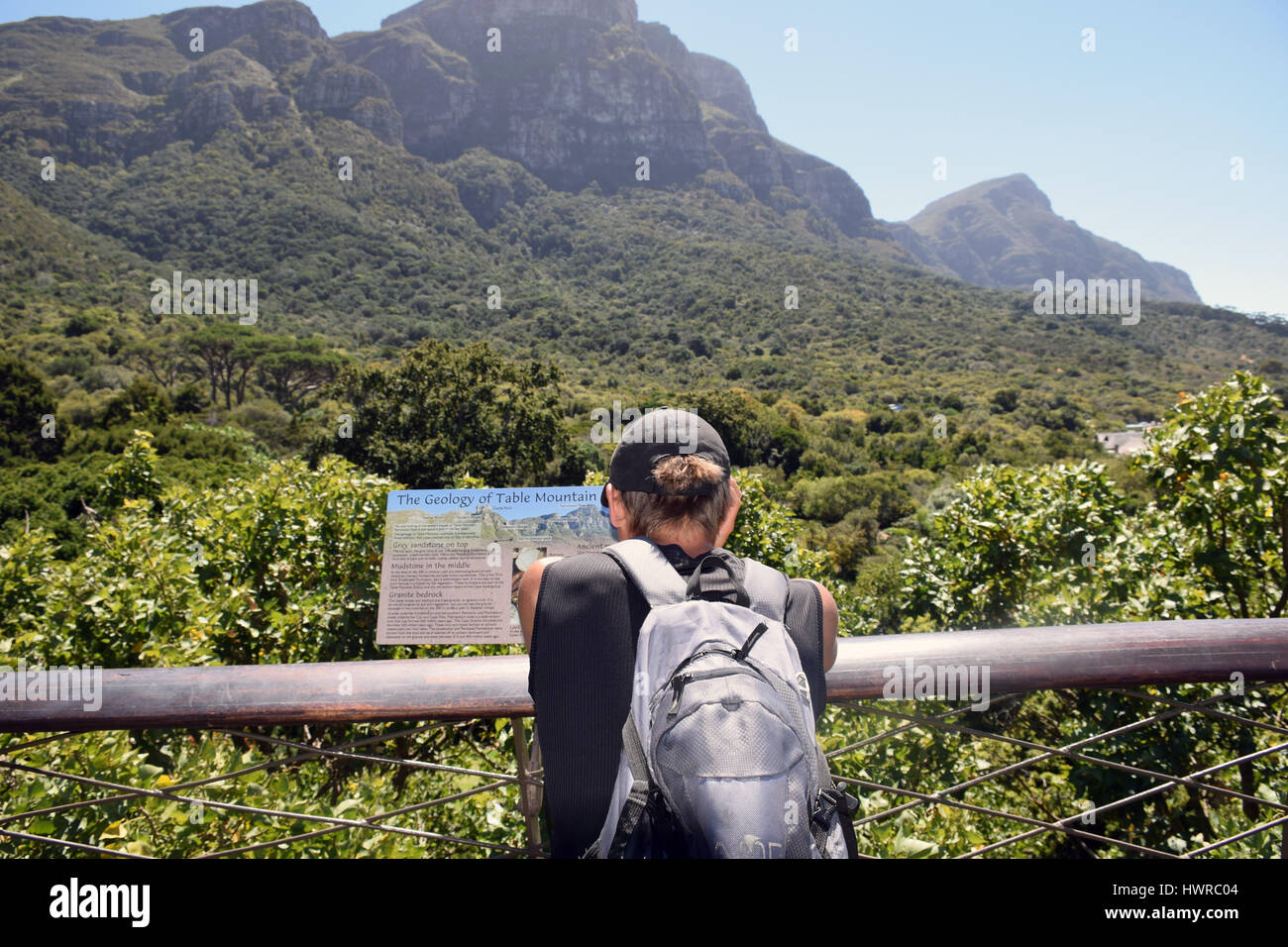 Kirstenbosch botanical gardens, treetop canopy walk, Cape Town, South Africa Stock Photo
