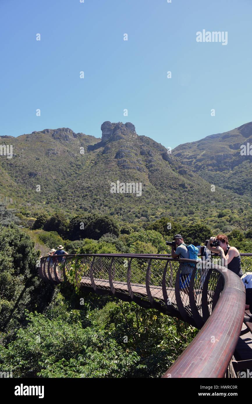 Kirstenbosch botanical gardens, treetop canopy walk, Cape Town, South Africa - Stock Image